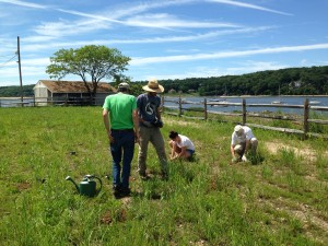 Grassland restoration project at ExxonMobil Property in Cold Spring Harbor