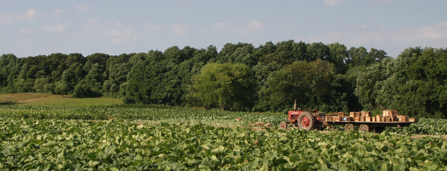 WE PROTECT THE FARMLAND THAT PRODUCES HEALTHY